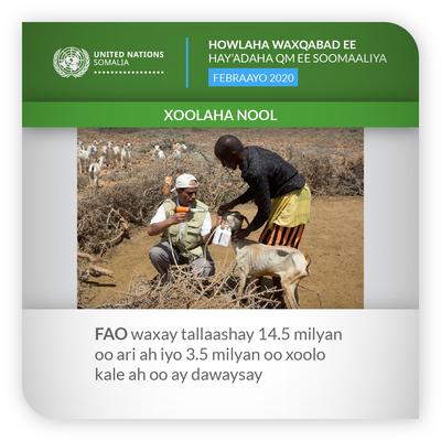 ROUNDUP FAO FEB 2020 som